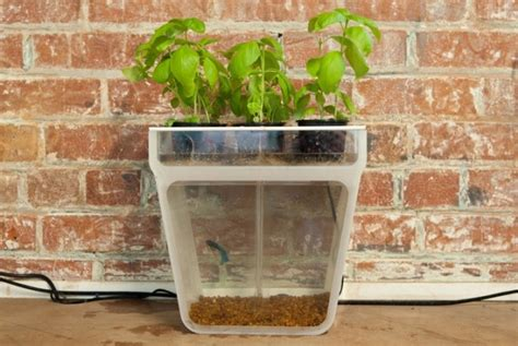 self sustaining garden self cleaning aquarium feeds attached herb garden psfk
