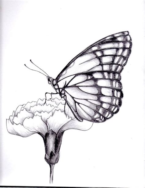 drawn moth butterfly pencil and in color drawn moth