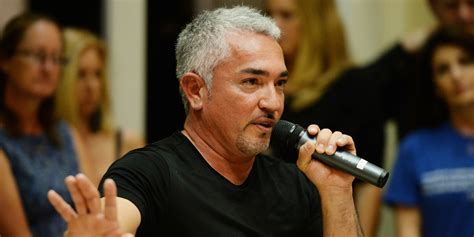 cesar millan s cesar millan s animal cruelty investigation is a up call for trainers huffpost