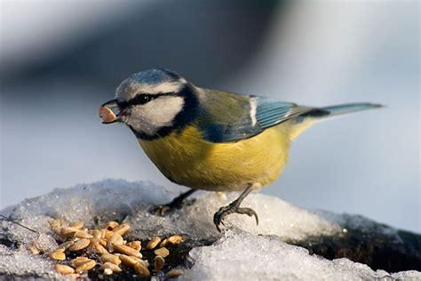 bird feeding when to feed wild birds