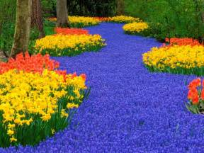 Flowers Of Netherlands - keukenhof weiner elementary