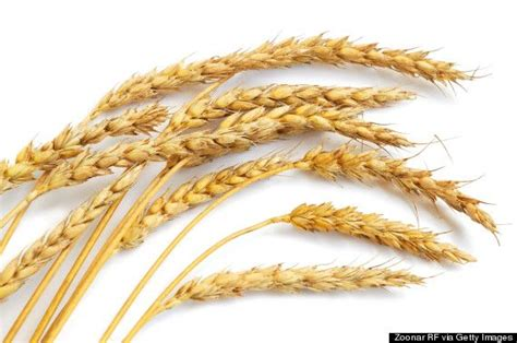 8 whole grains 12 best images about benefits of wholegrains on