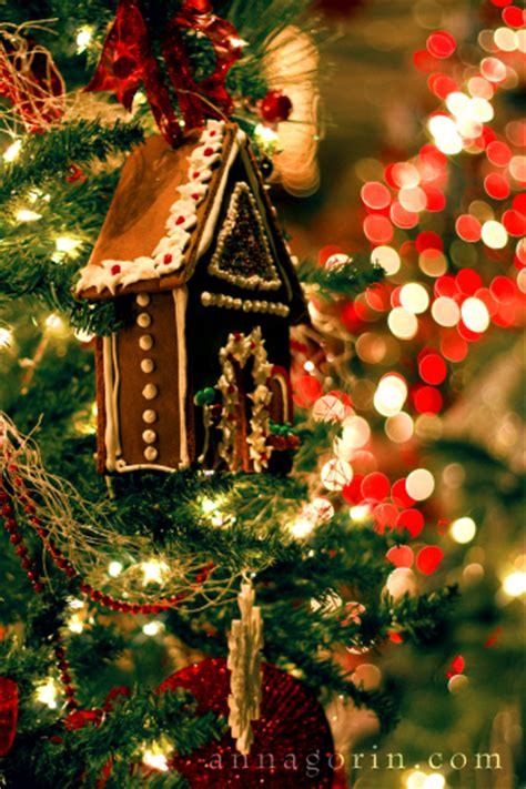 christmas 2012 miscellaneous anna gorin photography