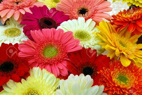 Ideas For Gerbera Flowers Ideas For Gerbera Flowers 18746