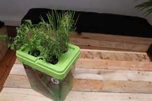 plantes aromatiques int 233 rieur citizenfarm
