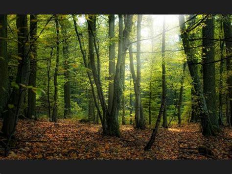 imagenes de sonidos naturales ranking de sonidos de la naturaleza listas en 20minutos es