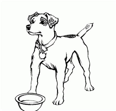 realistic dog coloring pages coloring home
