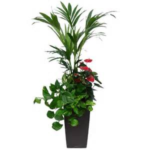 composition 3 plantes rempot 233 es dans pot lechuza cubico