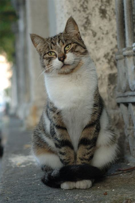 For Cats by Aya Sofia Cats