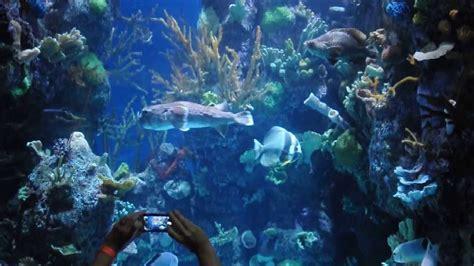 chicago shedd aquarium reef