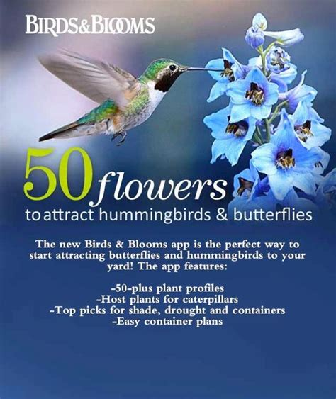 botanica ii flowers that attract hummingbirds and butterflies volume 2 books hummingbirds property matters and butterflies on