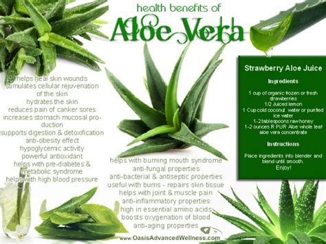 Aloe Vera Benefits Detox by Health Benefits Of Aloe Vera Liver Cleansing Diet