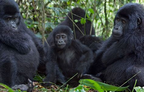 Bwindi Impenetrable NP Photos – Images & Pictures