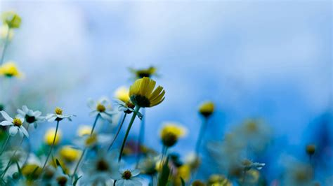 hd themes of flowers 25 free hd flowers wallpapers