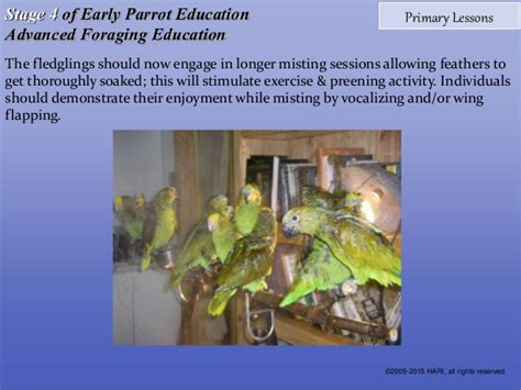 which stage of mentoring is most comfortable for the novice early parrot education stage 4 advanced foraging education