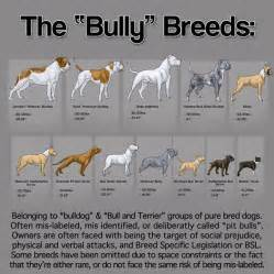 Dz s adventures history of bully breeds american pit bull terrier