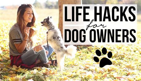 pug puppy care tips 15 hacks for owners pet care tips tricks ariel hamilton pug