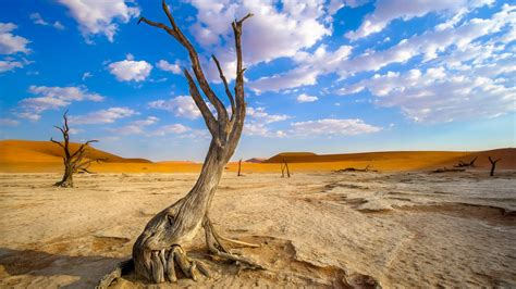 dry tree clounds sky  hd wallpapers hd wallpapers id