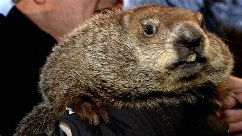 groundhog day live 2015 groundhog day 2017 what time channel to