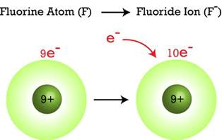 Fluorine Protons Ions Ck 12 Foundation