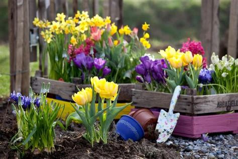 colorful spring flowers  yard landscaping ideas