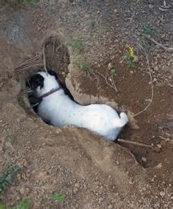 Landscaping Ideas To Keep Dogs From Digging Friendly Garden Ideas For Dogs That Dig Breeds
