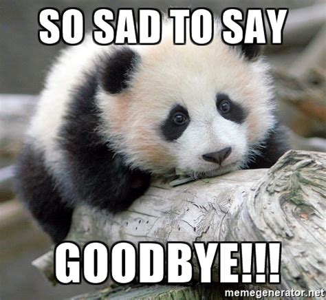 Goodbye Cat Meme - so sad to say goodbye sad panda meme generator