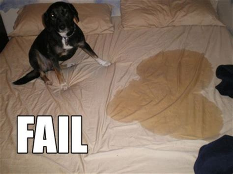 dog pees on bed 10 dogs training just couldn t fix thedogtrainingsecret com
