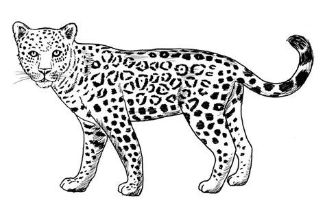 imagenes animadas de un jaguar jaguar dibujo dibujos