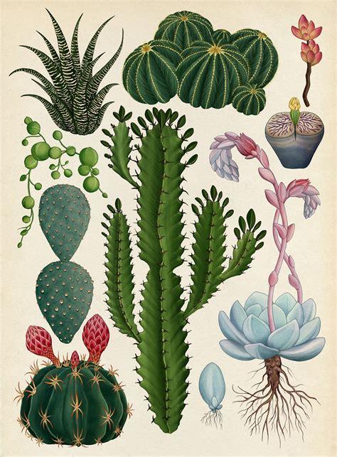 botanical pattern ai the botanical drawings of katie scott