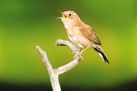 the dawn chorus nature s best symphony canopymeg
