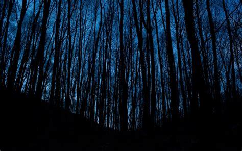 wallpaper dark tree dark trees wallpaper background hd wallpaper background
