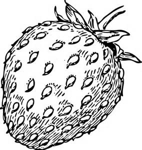 Strawberry Outline Drawing by Strawberry Drawing Clip At Clker Vector Clip Royalty Free Domain