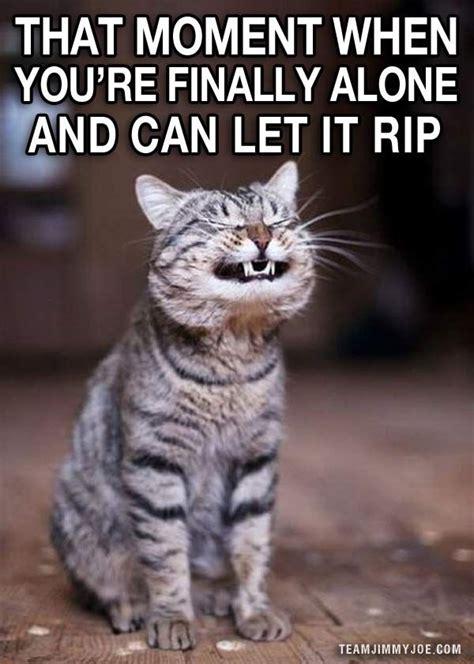 Crazy Cat Meme - 15 ways to laugh funny pics memes funny pics memes