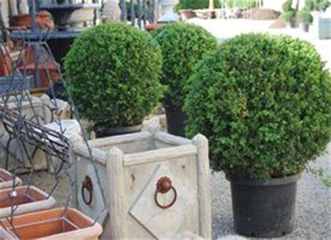 alberelli da vaso piante da balconi piante da terrazzo piante balcone