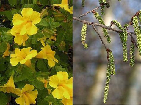 fiori di bach rimedi vincere la paura con i rimedi naturali i fiori di bach