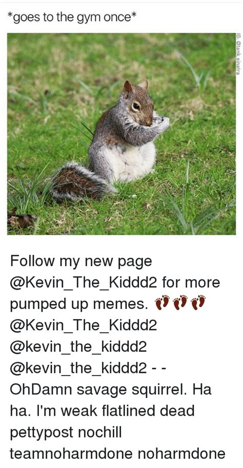Dead Squirrel Meme - funny squirrels memes of 2017 on sizzle squigga