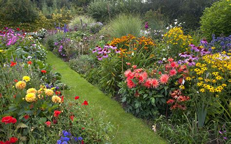 how to create a herbaceous border on a budget herbaceous