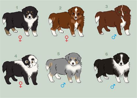 border collie puppies oregon classify border collie