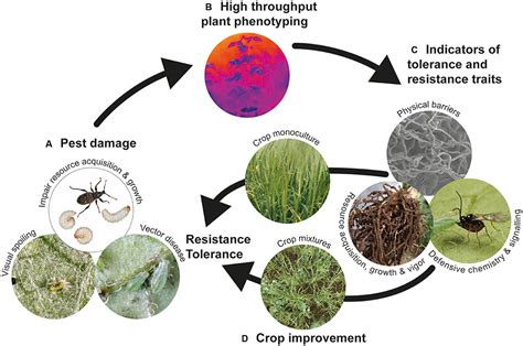 frontiers plant defense against herbivorous pests