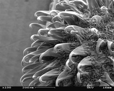 analytical uhr schottky emission scanning electron microscope su