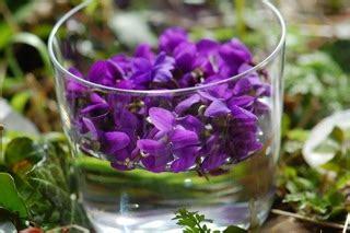 come preparare i fiori di bach come preparare i rimedi floreali fiori di bach