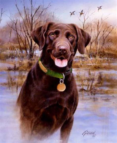 chocolate golden retriever retrievers painted by jim killen 34