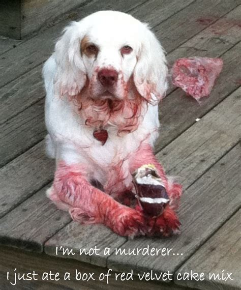 m dogs pet shaming 11 pics