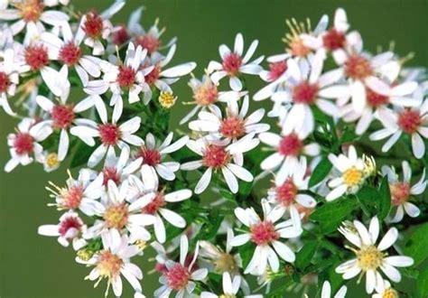 ansia rimedi naturali fiori di bach fiori di bach rimedi naturali caratteristiche