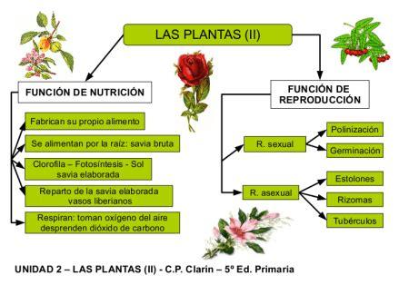 olguchiland las plantas ii funciones vitales en las plantas www plantasyjardines es