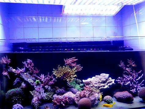 sb reef lights review aquarium reef lighting fixtures light fixtures