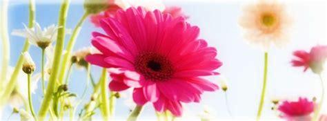 imagenes alegres para portada de facebook floreadas im 224 genes de primavera para portada de facebook