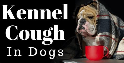 how do dogs get kennel cough kennel cough in dogs