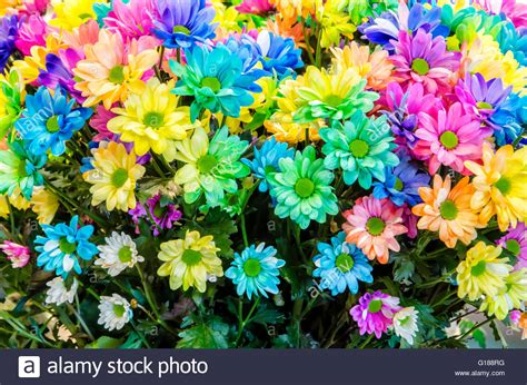 bright colored flowers multi colored flowers beautiful bouquet of colored